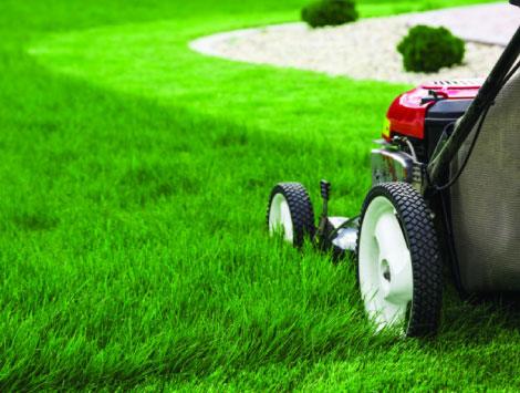 Landscaping Service in Denver CO